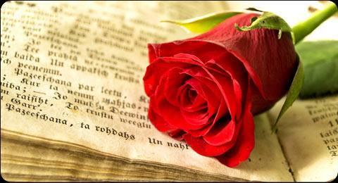 Un tercio de las rosas de Sant Jordi salen de Mercabarna, el 90 % de importación