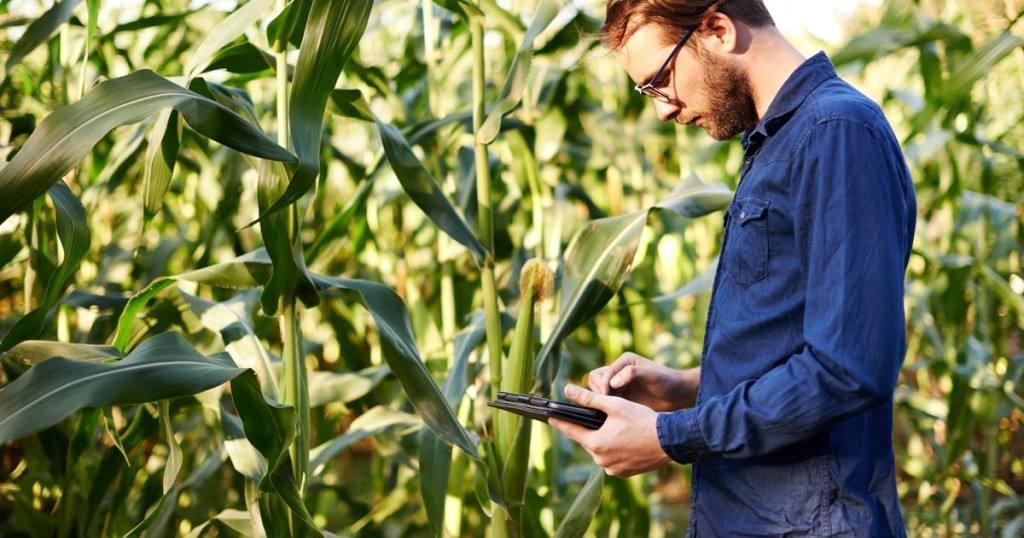 2017, un buen año para el sector agroalimentario