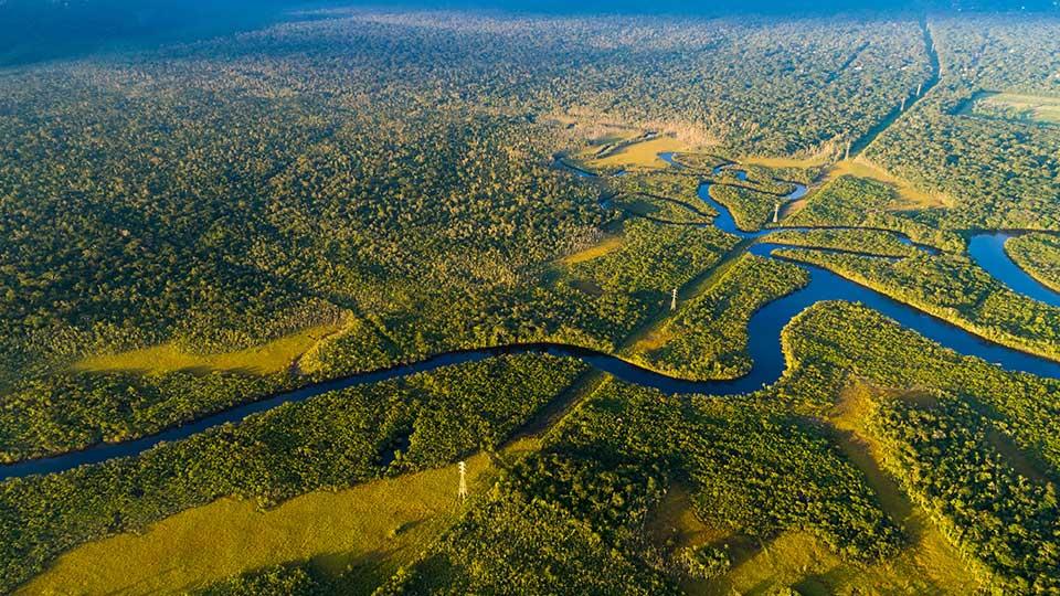 Nestlé, monitorizará por satélite la cadena de suministro de aceite de palma
