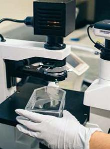 carne in vitro