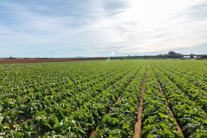 Nueva fábrica de Vegetales Línea Verde en Murcia