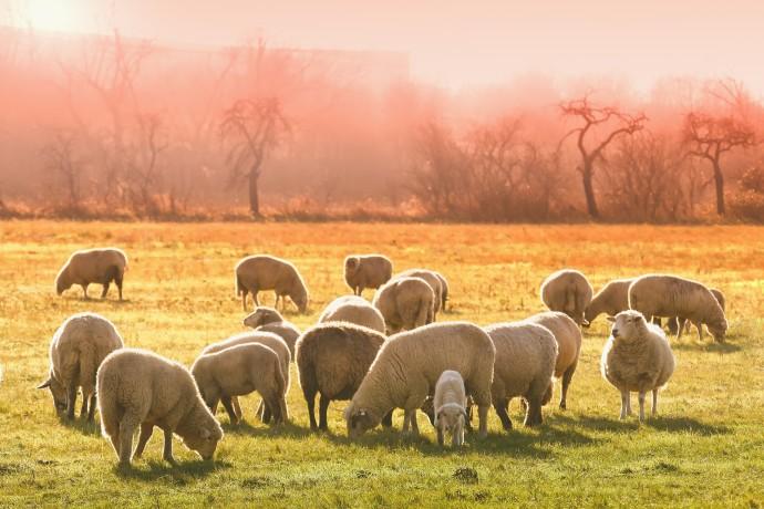 Un pastor castellonense apuesta por el queso ecológico con energía verde