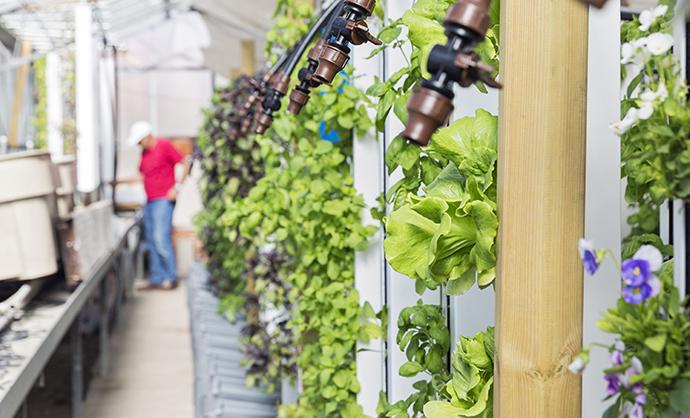 El boom de la agricultura vertical