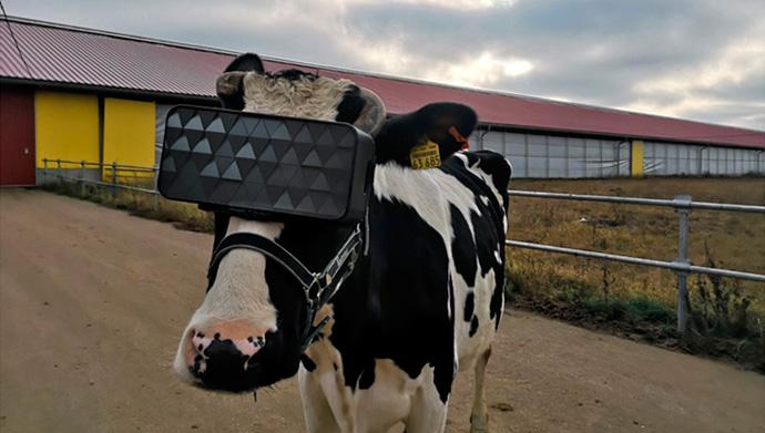 Prototipo de las gafas de realidad virtual desarrolladas en Rusia (Foto: Ministerio de Agricultura de Rusia)