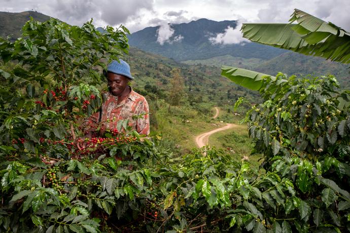 Nespresso continúa con su labor de recuperación de cultivos de café