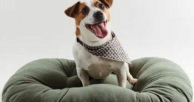 Zara apuesta por el mundo animal: lanza una colección para perros